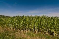Corn field near Baden Baden , Baden-Wuerttemberg, Germany Stock Images