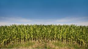 Corn field near Baden Baden , Baden-Wuerttemberg, Germany Stock Photos
