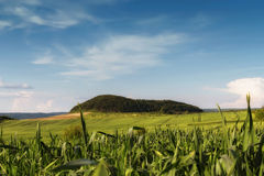 Corn field near mountains Royalty Free Stock Images