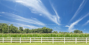 Corn Field Panoramic Shot Royalty Free Stock Photography