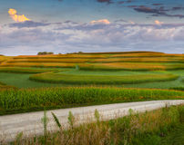 Corn Field Patterns and Gravel Road Royalty Free Stock Photo