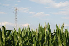 Corn Field and Pylon 1 Royalty Free Stock Images