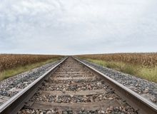 Corn field by the railroad tracks royalty free stock photos