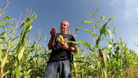 Corn Field Ready for Harvest stock video footage