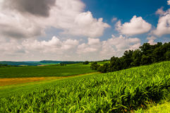 Corn field and rolling hills in rural York County, Pennsylvania. Royalty Free Stock Photos