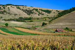 Corn field romania Stock Photo