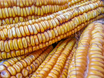 Corn field from Romania Stock Photos
