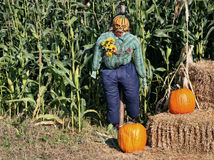 Corn Field Scarecrow. Scary Halloween scarecrow at the edge of the farm corn field Royalty Free Stock Images