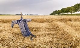 Corn field with scarecrow Royalty Free Stock Images