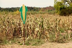 Corn field with a sign of a corn husk identifying the crop. Taken at Andrew`s Scenic Acres, Canada Stock Photo