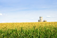 Corn field with silos Stock Photos