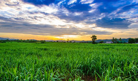 Corn field and sky with beautiful clouds. Of Thailand Stock Photos