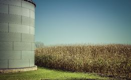 Corn field with space - fall season Royalty Free Stock Images