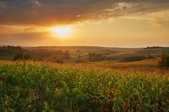 Corn field at sunset Stock Image