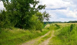Corn field trail Royalty Free Stock Photos