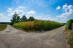 Corn Field Two Paths Diverging Asphalt Route Decision. Corn Field Two Paths Diverging Asphalt Route royalty free stock image
