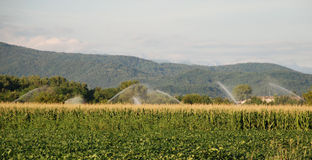 Corn Field Under Irrigation Stock Photos