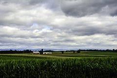 Corn Field Vista Stock Photos