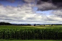 Corn Field Vista Stock Images
