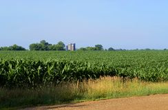 Corn Field Vista Royalty Free Stock Image