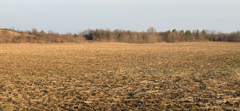A Corn Field in Waiting Stock Images