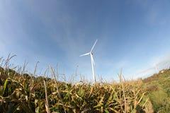 Corn field and windmill in France. Corn field and windmill in Aisne, Picardie region of France royalty free stock image