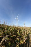 Corn field and windmill in France. Corn field and windmill in Aisne, Picardie region of France royalty free stock photography
