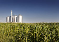 Corn Field With Agricultural Silos Stock Photos