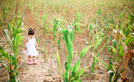 Corn field2. Little angel in the corn wheat field Stock Images