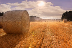 Corn fielding autumn with famos clouds sky Stock Photo