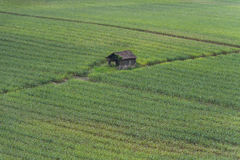 Corn fields. Shack in the middle of a cornfield Royalty Free Stock Photos