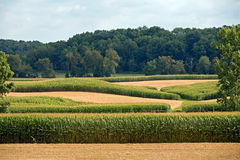 Corn Fields Stock Photography