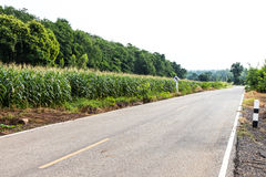 Corn fields with road signs. stock photo