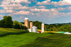 Corn fields and silos on a farm in Southern York County, Pennsyl Royalty Free Stock Images