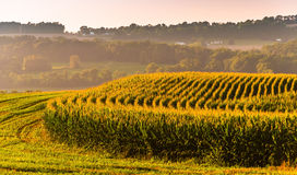 Corn fields and view of distant hills in rural York County, Penn Royalty Free Stock Photo