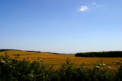 Corn fileds wiltshire uk. Summer hot blue sky idylic clean air quiet relax relaxing countryside england traditional rural Stock Photography