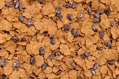 Corn flake cereal with raisins Royalty Free Stock Image