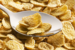 Free Corn Flakes Royalty Free Stock Photography - 19822717