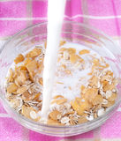 Corn flakes with milk Stock Image
