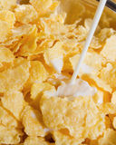Corn flakes with milk. Healthy eating. Close-up Stock Images