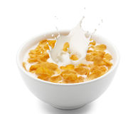 Corn flakes with milk splash. Isolated on white Stock Photos