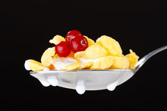 Corn flakes on the spoon Royalty Free Stock Image