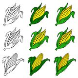 Corn. A flower banner for text Royalty Free Stock Photos