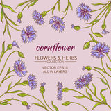 Corn flower vector frame. Cornflower plant vector frame on color background Stock Image