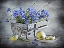 Corn-flowers y manzanas Imagen de archivo libre de regalías