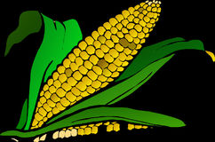 Corn, Food, Maize, Plant Royalty Free Stock Images