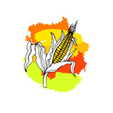 Corn food vector illustration natural maize healthy fresh organic Royalty Free Stock Images