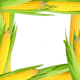 Corn frame Stock Images