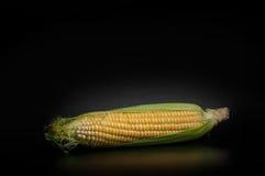 Corn. Fresh corn on black background Royalty Free Stock Image
