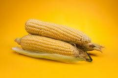Corn. Fresh corn on yellow background stock photos